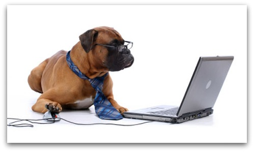 Dog working at computer