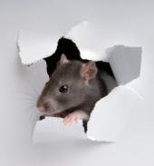Shady RAT