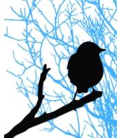 Bird silhouette. Credit: Shutterstock