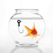 Goldfish in bowl, courtesy of Shutterstock