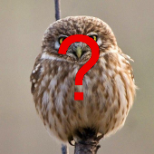 Owl image retrieved by malware