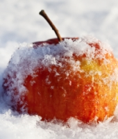 Apple in snow. Image from Shutterstock