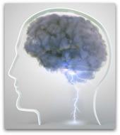 brain instinct