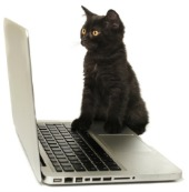 Cat on computer. Image courtesy of Shutterstock