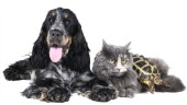 Dog, cat and turtle. Image courtesy of Shutterstock.