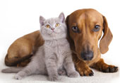 Cat and dog. Image courtesy of Shutterstock.