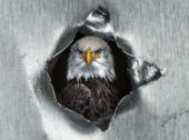 Images of hole and eagle courtesy of Shutterstock