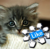 Image of cute kitten from wikimedia commons, Likes from Shutterstock