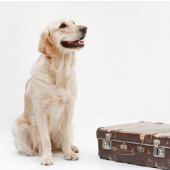 Dog with suitcase, courtesy of Shutterstock