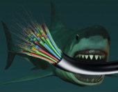 Composite image of shark and cables courtesy of Shutterstock