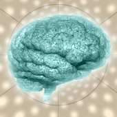 Image of brain courtesy of Shutterstock.