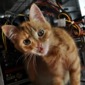 Cat. Image courtesy of Shutterstock.