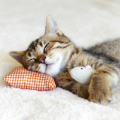Image of kitten sleeping with toy mouse, courtesy of Shutterstock