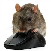 Rat. Image courtesy of Shutterstock
